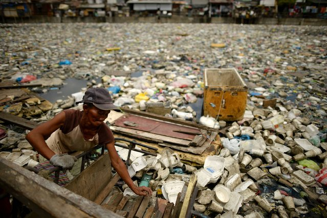 Teresita Gapayao, 51, a scavenger for 12 years, wades through garbage using a makeshift raft made from styrofoam on the Estero de Vitas tiver in Tondo, Manila on April 21, 2016. Gapayao collects plastic bottles and anything that can be sold to junkshops as a living earning an average of 3 USD a day. The annual Earth Day event which will be celebrated on April 22, marking its 46th year, is a global movement calling for environmental protection. (Photo by Noel Celis/AFP Photo)