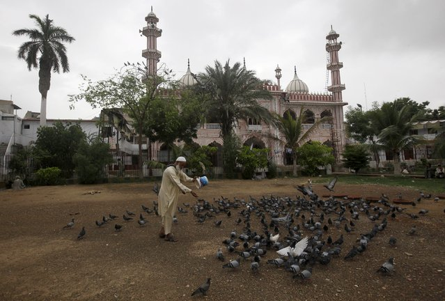 A man holds a bucket of lentils while feeding pigeons in front of a mosque in Karachi, Pakistan, July 25, 2015. Many Pakistanis believe feeding pigeons brings good luck. (Photo by Akhtar Soomro/Reuters)