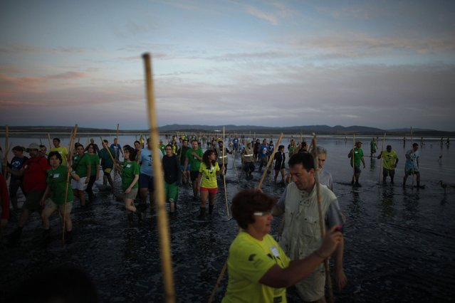 Volunteers wade across a lagoon at dawn to gather flamingo chicks and place them inside a corral at the Fuente de Piedra natural reserve, near Malaga, southern Spain, July 19, 2014. Around 600 flamingos were tagged and measured before being placed in the lagoon, one of the largest colonies of flamingos in Europe, according to authorities of the natural reserve. (Photo by Jon Nazca/Reuters)