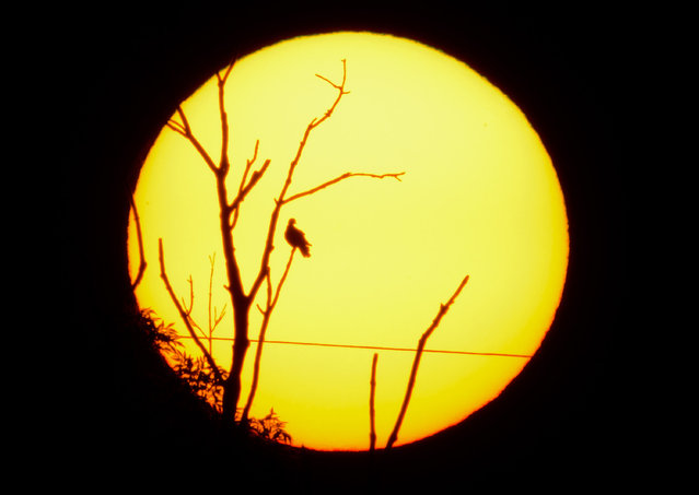 A bird sits on the branch of a tree silhouetted against the rising sun near Sehnde, Germany, September 18, 2014, in this deliberately underexposed picture. Indian summer, or Altweibersommer (old womens summer) in German, is a weather phenomenon which often brings sunny weather between mid-September and the start of October in parts of central Europe. (Photo by Julian Stratenschulte/EPA)