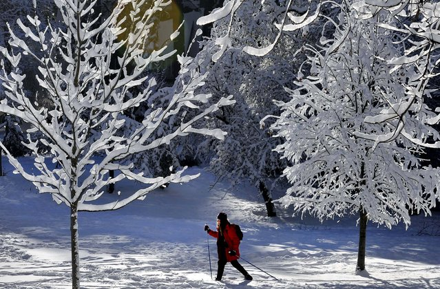 Inge Sandvoss, 71, enjoys cross country skiing around Cannon Hill Park in Spokane, Washington on December 31. Sandvoss says when there is enough snow, she skis through the neighborhood instead of going to Mt. Spokane. (Photo by Dan Pelle/The Spokesman-Review)