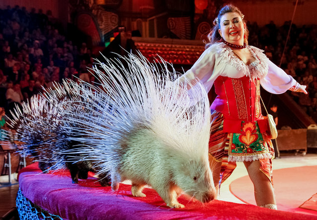 """Porcupines perform during the presentation of the new show """"The extreme arena"""" at the National Circus in Kiev, Ukraine, September 15, 2016. (Photo by Gleb Garanich/Reuters)"""