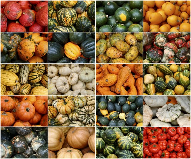 Various kinds of pumpkins, out of some 400 on display grown this season, are pictured in this combination photo at Franzlbauer farm in Hintersdorf, Austria, October 27, 2015. (Photo by Heinz-Peter Bader/Reuters)