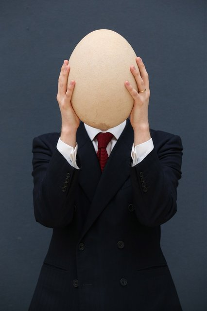 """James Hyslop, a Scientific Specialist at Christie's auction house holds a complete sub-fossilised elephant bird egg on March 27, 2013 in London, England. The elephant bird egg is expected to fetch 30,000 GBP when it features in Christie's """"Travel, Science and Natural History"""" sale, which is to be held on April 24, 2013 in London.  (Photo by Oli Scarff)"""
