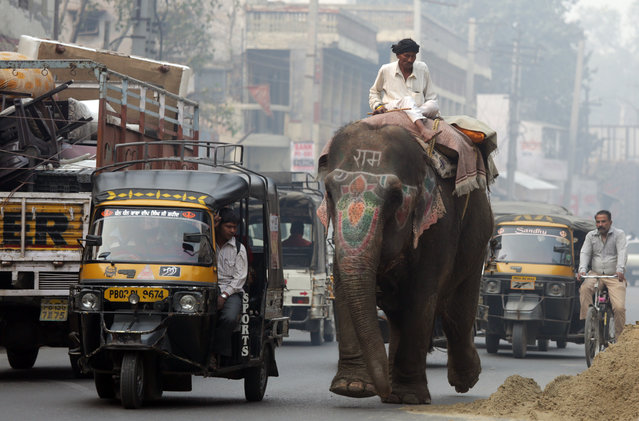 A mahout rides on an elephant in the city of Amritsar, India, 08 November 2015. Such elephants are often accompanied by their caretakers who ask for alms from people in the streets. (Photo by Raminder Pal Singh/EPA)