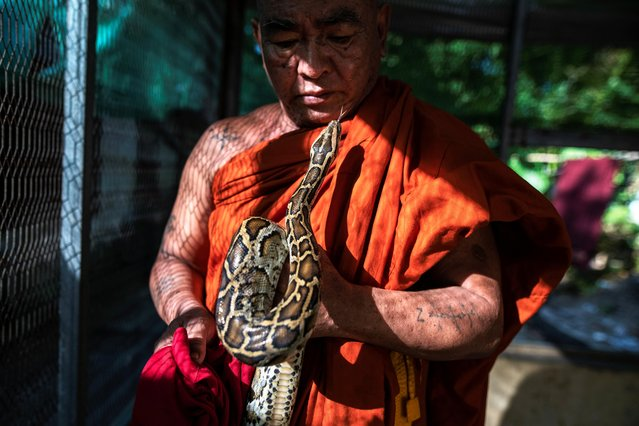 Buddhist monk Wilatha holds a rescued Burmese python at his monastery that has turned into a snake sanctuary on the outskirts of Yangon, Myanmar, November 26, 2020. Wilatha is trying to play a part in saving scores of snakes that might otherwise be killed or destined for the black market. (Photo by Shwe Paw Mya Tin/Reuters)