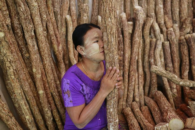 A woman smell tests a piece of Thanakha wood for a customer at the Kyaik-Khauk pagoda festival in Tanlyin township, outside Yangon, February 2, 2015. Thanakha, a traditional cosmetic paste in Myanmar, is made from the wood and usually applied to the face in attractive designs. (Photo by Soe Zeya Tun/Reuters)