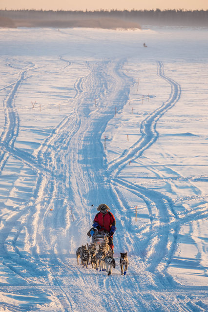 Nathan Schroeder mushes on the Yukon River between Nulato and Kaltag, Alaska, during the Iditarod Trail Sled Dog Race, Sunday, March 15, 2015. (Photo by Loren Holmes/AP Photo/Alaska Dispatch News)