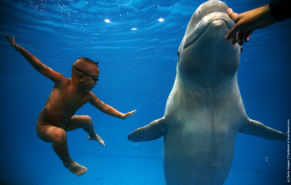 Four-year-old Chinese Boy Swims with Beluga Whale
