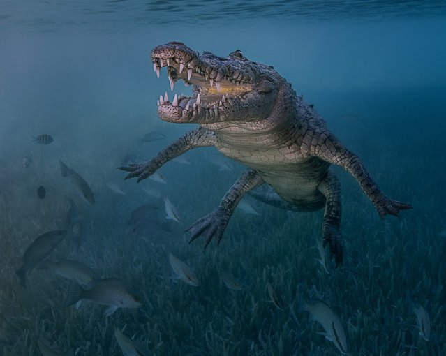 "Novice DSLR, 2nd Place. ""Smile of a Friend"", American Crocodile (Crocodylus acutus) in Jucaro, Cuba. (Photo by Antonio Pastrana/The Ocean Art 2018 Underwater Photography Competition)"