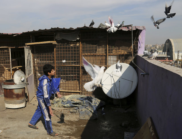 In this Wednesday, January 18, 2017 file photo, Ibrahim Othman, 15, tends to his family's pigeons on the roof of his house, in a neighborhood recently liberated from Islamic State militants, in eastern Mosul, Iraq. For the first time in over two years, flocks of white and grey pigeons can be seen circling Mosul's rooftops. Among the many strict rules imposed by the Islamic State group in the northern Iraqi city was a ban on breeding or flying the birds. Many Mosul residents killed off their flocks or confined them to cages, but Ibrahim and his brother, Mustafa couldn't bring himself to do it. (Photo by Khalid Mohammed/AP Photo)