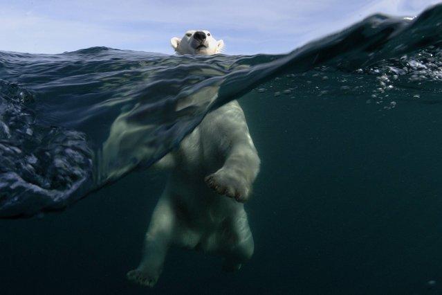 """Polar power"". Location: Repulse Bay, Nunavut, Canada. (Photo by Joe Bunni)"