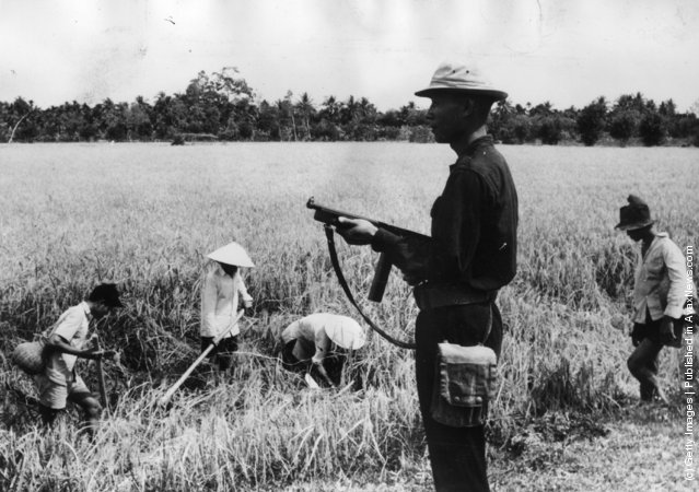 1962: A Vietnamese home-guard protects rice-paddy field workers in the Mekong Delta against attacks from guerillas who want to impede the South Vietnamese food supply