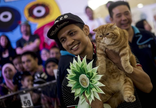 This picture taken on April 24, 2016 shows Matahari, an exotic shorthair tabby, being presented by its owner Nazly during an international cat show in Shah Alam. Some 200 participants took part in the annual show organised by the Malaysia Cat Club. (Photo by Manan Vatsyayana/AFP Photo)