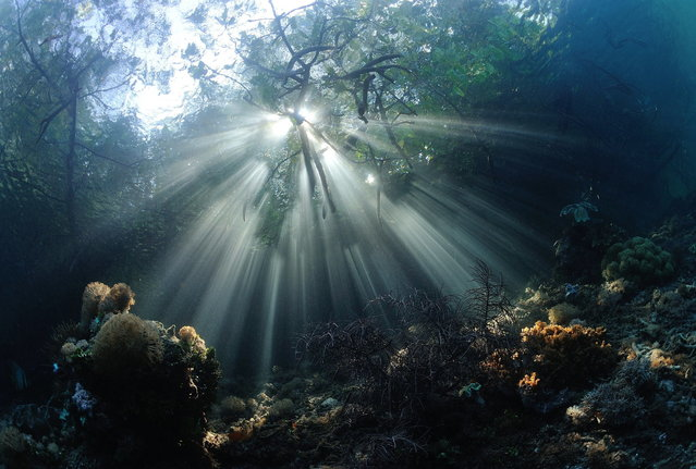 2014 Underwater Photography Photo Contest winners, Wide angle/Natural light (no strobe) category, 1st place. (Photo by Nadya Kulagina/UnderwaterPhotography.com)