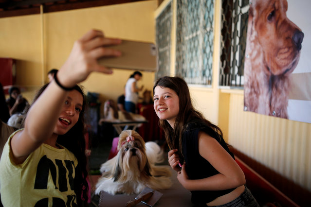 Girls take a selfie with a Shih Tzu dog during an international dog exhibition in Kannot, central Israel May 21, 2016. (Photo by Amir Cohen/Reuters)