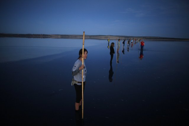 Volunteers wait to wade across a lagoon at dawn to gather flamingo chicks and place them inside a corral at the Fuente de Piedra natural reserve, near Malaga, southern Spain, July 19, 2014. Around 600 flamingos were tagged and measured before being placed in the lagoon, one of the largest colonies of flamingos in Europe, according to authorities of the natural reserve. (Photo by Jon Nazca/Reuters)