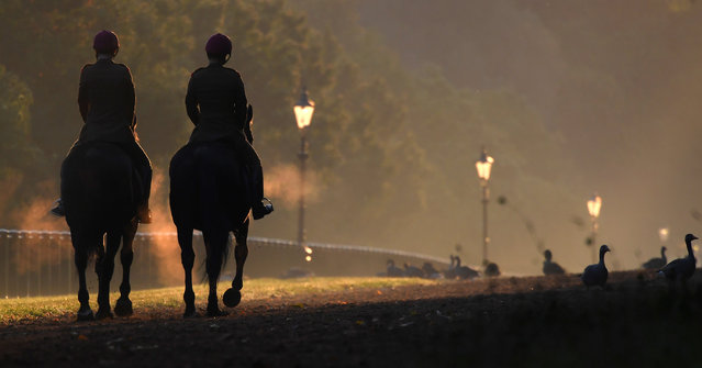 Horses are ridden early in the morning in Hyde Park in London Britain September 20, 2017. (Photo by Toby Melville/Reuters)