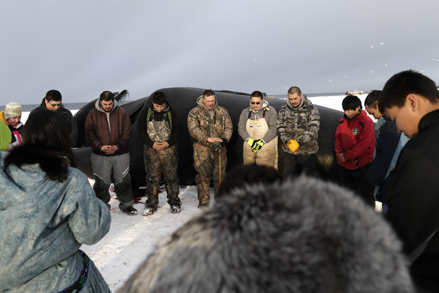 In this October 7, 2014, photo, Crawford Patkotak, above center, leads a prayer flanked by his sons Josiah, in green suspenders, Arnold, in white bib, and Samuel, fourth from right, after his crew landed a bowhead whale near Barrow, Alaska. Both revered and hunted by the Inupiat, the bowhead whale serves a symbol of tradition, as well as a staple of food. (Photo by Gregory Bull/AP Photo)