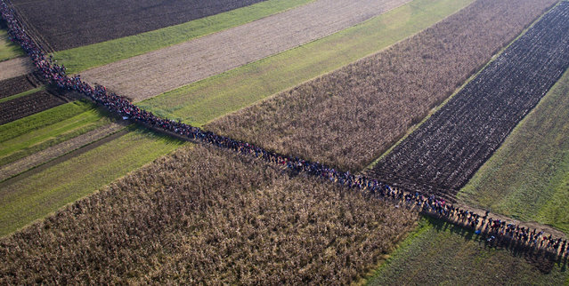 In this aerial  view photo, a column of migrants moves through fields after crossing from Croatia, in Rigonce, Slovenia, Sunday, October 25, 2015. Thousands of people are trying to reach central and northern Europe via the Balkans, but often have to wait for days in mud and rain at the Serbian, Croatian and Slovenian borders. (Photo by Darko Bandic/AP Photo)
