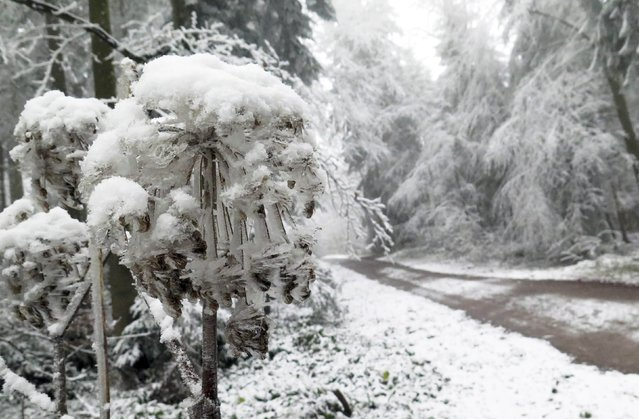 Ice covered trees are pictured at the Taubenberg mountain near Warngau December 2, 2014. (Photo by Michael Dalder/Reuters)