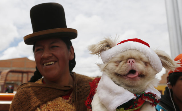 An Aymara indigenous woman carries her pet to a Christmas costume contest for dogs in El Alto, Bolivia, Saturday, December 20, 2014. About 50 dogs participated in the event organized by zoonosis. (Photo by Juan Karita/AP Photo)