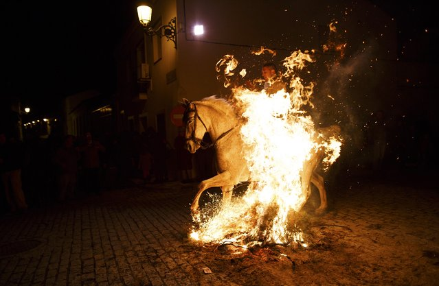 "A man rides through the flames on a horse during the ""Luminarias"" annual religious celebration on the eve of Saint Anthony's Day in the village of Alosno, southwest Spain, January 16, 2015. According to a tradition that dates back 500 years, people ride their horses through the narrow cobblestone streets of this small village to purify the animals with the smoke of the bonfires. Saint Anthony is the patron of animals. (Photo by Marcelo del Pozo/Reuters)"