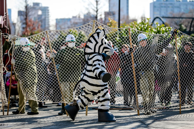 Zookeepers hold up a large net barricade to capture a zoo staff member dressed as a zebra at Ueno Zoo on February 2, 2016 in Tokyo, Japan. In the drill simulating the scenario that a zebra escaped in case of disaster, the Ueno Zoo workers, local police and emergency workers practiced evacuating the guests and capturing the zookeepers dressed in zebra costume. (Photo by Christopher Jue/Getty Images)
