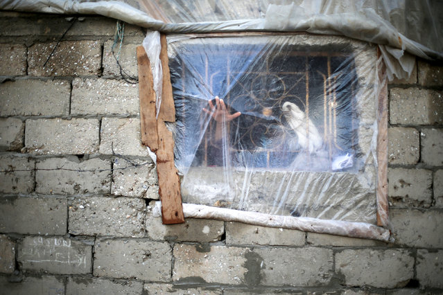 A Palestinian woman fixes the cover of her house window on a rainy day in Khan Younis in the southern Gaza Strip December 14, 2016. (Photo by Ibraheem Abu Mustafa/Reuters)