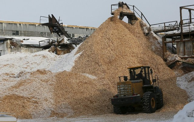 A tractor works near a pile of sawdust which is used for a heating at the Novoyeniseisk wood processing plant, with the air temperature at about minus 20 degrees Celsius (minus 4 degrees Fahrenheit), in the town of Lesosibirsk in Krasnoyarsk Region, Siberia, Russia, February 16, 2016. (Photo by Ilya Naymushin/Reuters)
