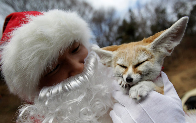 A helper dressed as Santa Claus holds a Fennec fox at Everland, South Korea's largest amusement park on December 18, 2013 in Yongin, South Korea. (Photo by Chung Sung-Jun/Getty Images)