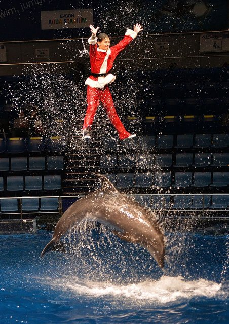 A trainer wearing a Santa Claus costume performs with a bottle-nose dolphin during a show at the Aqua Stadium aquarium in Tokyo on December 18, 2013. Visitors can enjoy the Christmas special show which will be held through to December 25. (Photo by Yoshikazu Tsuno/AFP Photo)