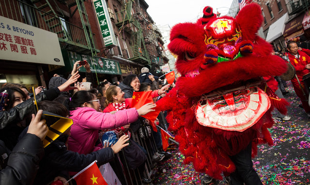 People participate in the Chinese New Year Parade on February 2, 2014 in the Chinatown neighborhood of New York City. The parade, which is in it's 15th year in New York, brought out thousands of participants and viewers.  (Photo by Andrew Burton/Getty Images)