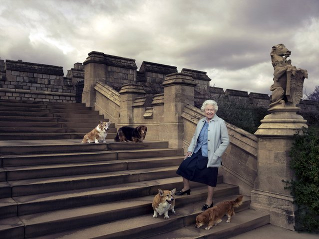 Britain's Queen Elizabeth II is seen walking in the private grounds of Windsor Castle on steps at the rear of the East Terrace and East Garden with four of her dogs: clockwise from top left Willow (corgi), Vulcan (dorgie), Candy (dorgie) and Holly (corgi), in this official photograph released by Buckingham Palace to mark her 90th birthday, April 20, 2016. (Photo by Annie Leibovitz/Reuters)