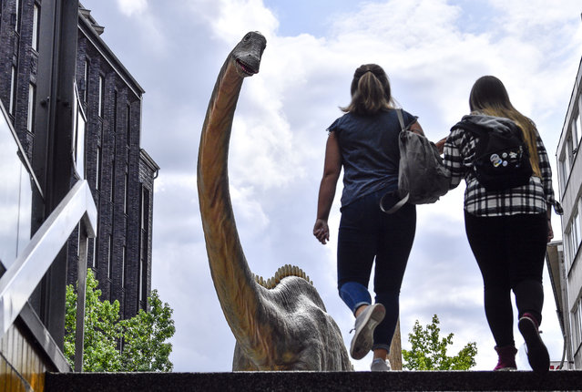 A life-size replica of a Diplodocus dinosaur watches people coming out of the subway in the city center of Bochum, Germany, Monday, August 12, 2019. The exhibition, featuring models of 33 dinosaurs all around the city center, is in Bochum due to the discovery of an 316 million years old dinosaur track found in a stone pit in the city six years ago. (Photo by Martin Meissner/AP Photo)