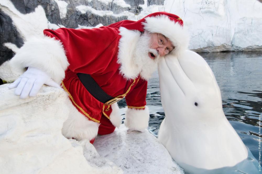 Santa Claus Visits SeaWorld San Diego