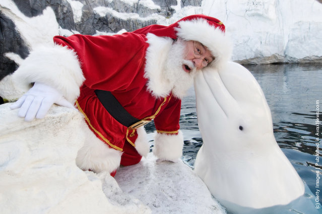 Santa Claus poses with a Beluga Whale at SeaWorld San Diego
