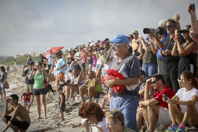 Spectators watch the Hang 20 Surf Dog Classic at Carlin Park in Jupiter Saturday, August 29, 2015. (Photo by Bruce R. Bennett/The Palm Beach Post)