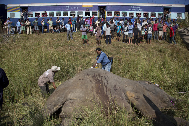 In this November 19, 2017, file photo, a passenger train passes as Indian vets measure the carcass of two endangered Asian elephants that were hit and killed by a passenger train near a railway track in Thakur Kuchi village on the outskirts of Gauhati, Assam state, India. Wildlife warden Prodipta Baruah says the elephants were part of a herd of about 15 that had ventured into the area in search of food before dawn Sunday. (Photo by Anupam Nath/AP Photo)