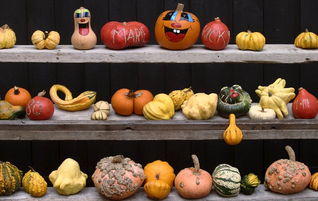 Various kinds of pumpkins, out of some 400 on display grown this season, are seen on sale at Franzlbauer farm in Hintersdorf, Austria, October 27, 2015. (Photo by Heinz-Peter Bader/Reuters)