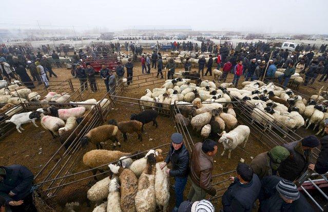 People select sheep and goats at a livestock trading market in Yanqi Hui Autonomous County, Xinjiang Uighur Autonomous Region, China, November 29, 2015. (Photo by Reuters/China Daily)