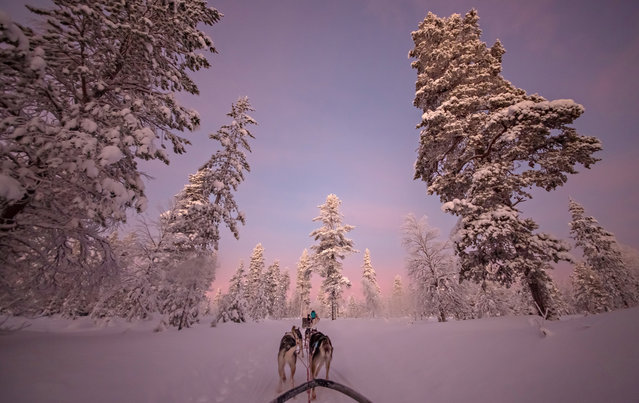 """Husky ride "". Huskies pulling my sledge through the forest. Location: Finland Lapland. (Photo and caption by William Chua/National Geographic Traveler Photo Contest)"