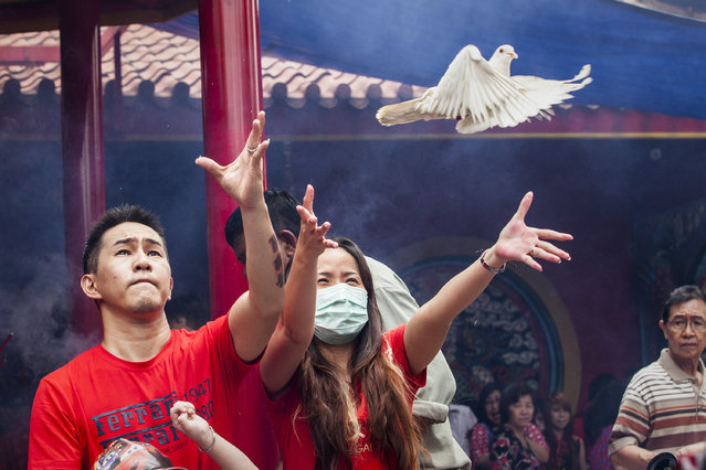 Indonesian Chinese  release pigeaon as part of pray during Chinese New Year celebrations at  Dharma Bhakti Temple on February 19, 2015 in Jakarta, Indonesia. The Chinese Lunar New Year of the Sheep also known as the Spring Festival, is based on the Lunisolar Chinese calendar, and is celebrated from the first day of the first month of the lunar year and ends with a Lantern Festival on the Fifteenth day. (Photo by Oscar Siagian/Getty Images)