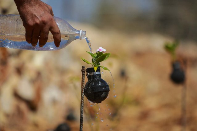 A man waters a flower planted in a tear gas canister in the village of Bilin, near the West Bank city of Ramallah, on October 2, 2013. The tear gas canisters were collected during years of clashes with Israeli security forces. (Photo by Majdi Mohammed/Associated Press)