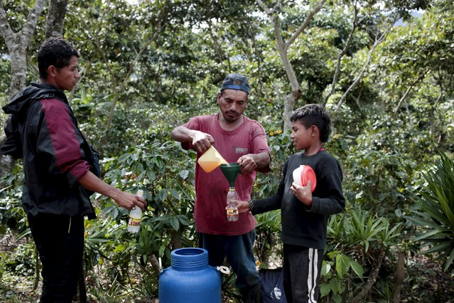 A worker distributes drinks to coffee pickers during a break at the Nogales farm in Jinotega, Nicaragua January 7, 2016. (Photo by Oswaldo Rivas/Reuters)
