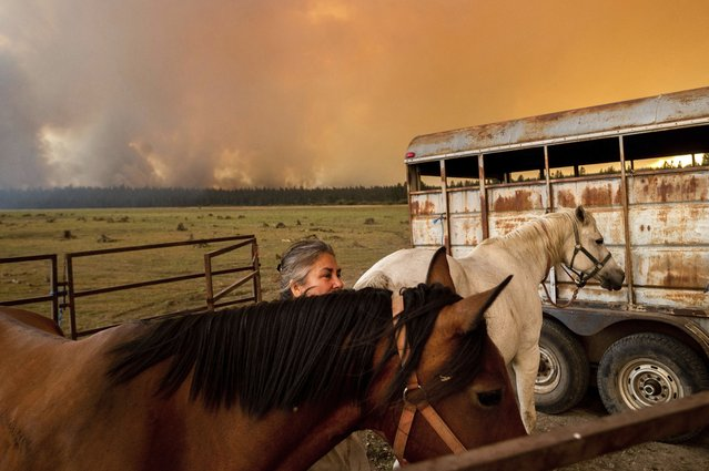 Dawn Garofalo settles her horses in a temporary enclosure on the shore of Lake Almanor as the Dixie Fire approaches Chester, Calif, on Tuesday, August 3, 2021. Garofalo, whose pickup truck has mechanical problems, planned to ride out the fire on the edge of the lake. (Photo by Noah Berger/AP Photo)