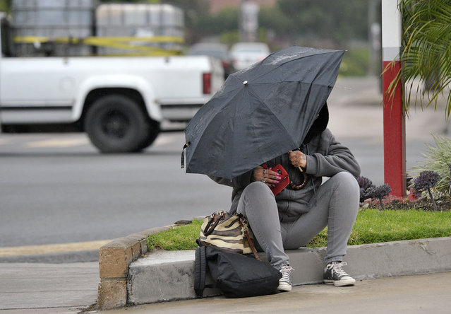 A woman wipes water off her cell phone as she waits for a ride under her umbrella in the rain on Friday morning at the intersection of East Street and Lincoln Avenue in Anaheim, Calif. on Friday, May 15, 2015. (Photo by Ken Steinhardt/The Orange County Register via AP Photo)