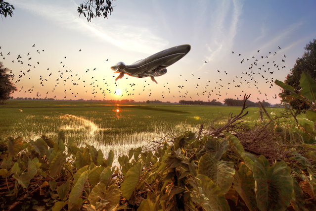 A Nubian Royal Starship hovers over the Malaysian rice fields. (Photo by Zahir Batin/Mercury Press)