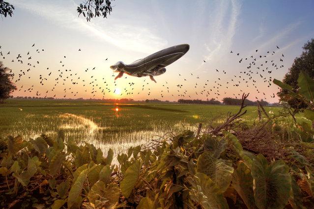 A Nubian Royal Starship hovers over the Malaysian rice fields. (Photo by Zahir Batin/Mercury Press)