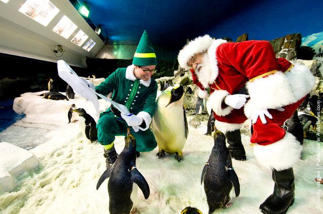 Santa Claus poses with Penguins at SeaWorld San Diego